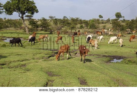 Africa. Kenia. Animals In Masai Mara National Park