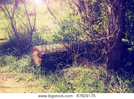 a little hidden clearing in a forest with a log and the sun rays poking though the branches toned with a retro vintage instagram filter effect app or action