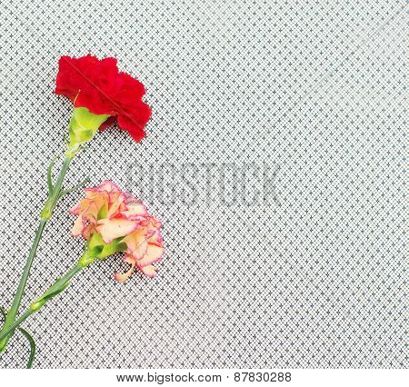 Two Carnations On Black Veiling