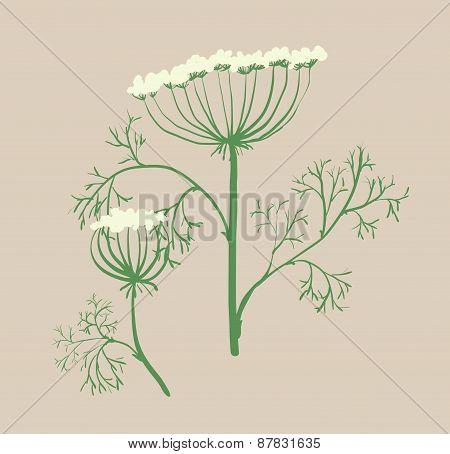Set Of Floral Graphic Design Elements Dill, Ukraine