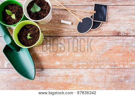 gardening and planting concept - close up of seedlings, garden trowel and nameplates on table