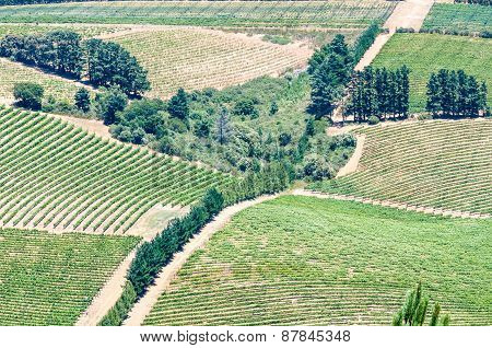View Of Vineyards Near Somerset West, South Africa.