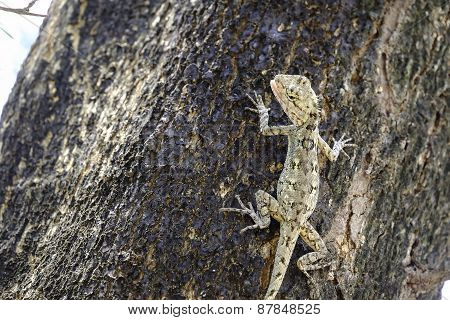 Brown lizard,beauty colorful background blur