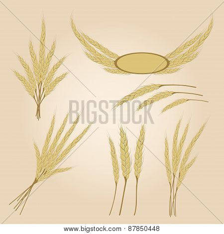 Ripe Yellow Rye Ears, Agricultural Vector Illustration