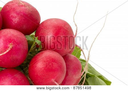 Bunch Of Radishes Isolated On A White Background