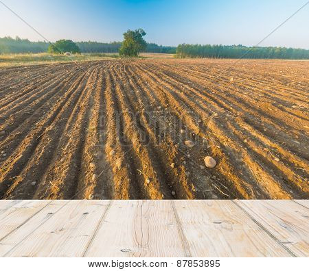 Plowed Field At Sunrise With Wooden Floor