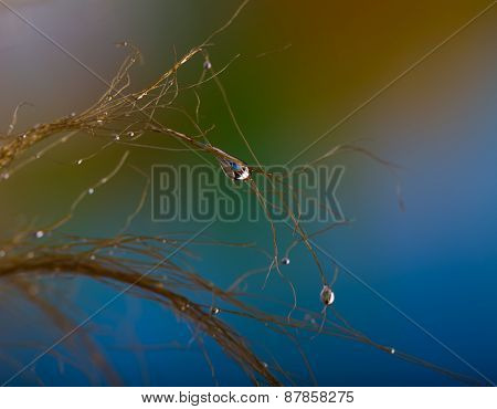Abstraction Of Water Droplets On Hair In Close Up