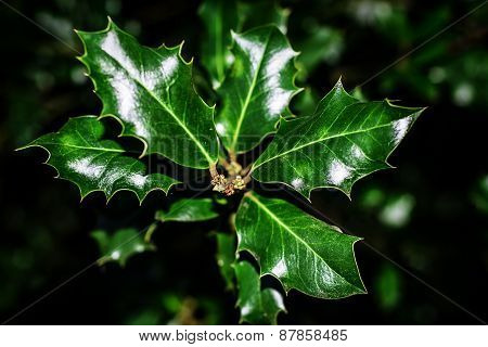 Dark green leaves.