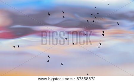 Abstract Photo Of Birds Against Water Surface