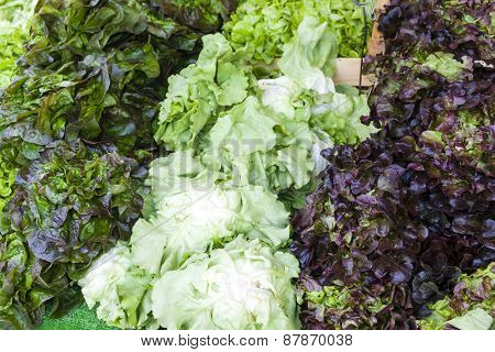 lettuce, market in Forcalquier, Provence, France