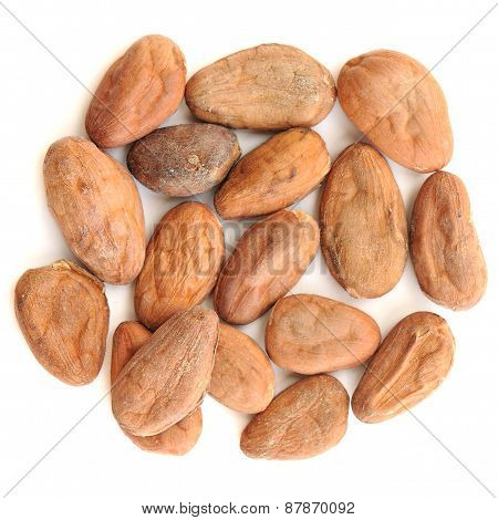 Raw Cocoa Beans In Round Shape Isolated