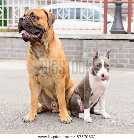 Two Dogs Sits