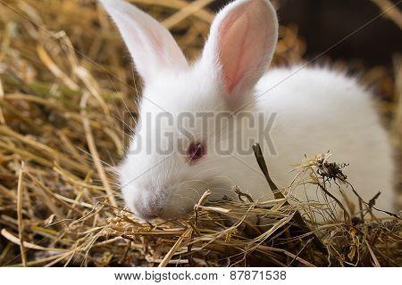 Rabbit On Dry Grass