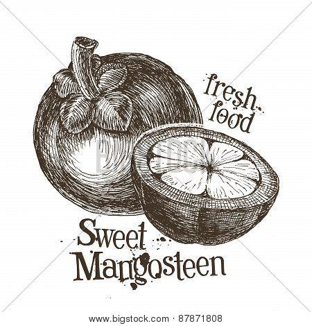 mangosteen logo design template. fresh fruit, food or harvest icon.