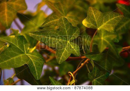 green climbing plant