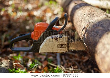 Chainsaw Stuck Into A Tree