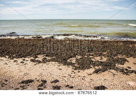 Sea Dirt