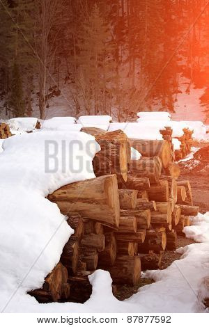 Heap Of Wooden Logs On A Sunset Background