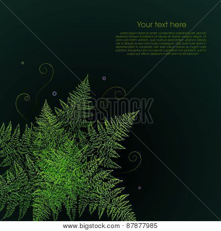 Green fern plant on a black background