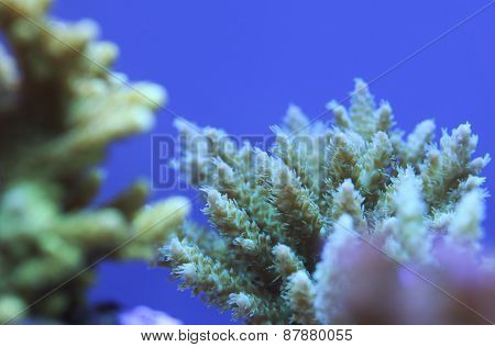 Coral Branch Detail