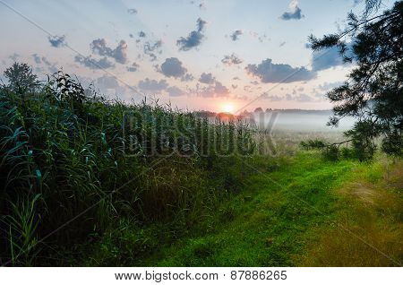 Misty dawn in the reeds by river