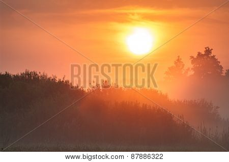 Dawn over treetops in fog