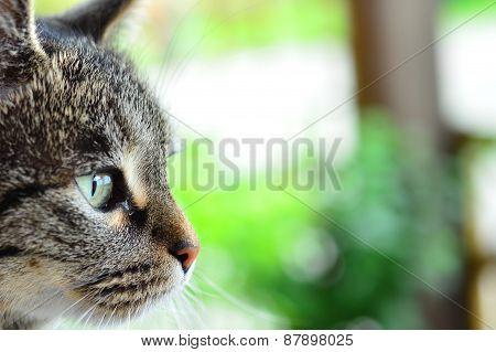 Cat (profile)