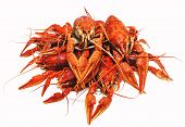 picture of crawfish  - appetizing red boiled crawfish on a white background - JPG