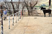 foto of poop  - Mature female rancher cleaning horse poop in the stable - JPG
