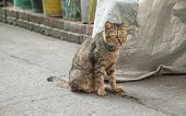 picture of animal cruelty  - Homeless old cat sit on the floor - JPG