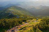 picture of coniferous forest  - Summer landscape - JPG