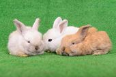 stock photo of cony  - small newborn rabbits on a green background  - JPG