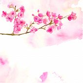 picture of cherry  - Pink background with branch of cherry blossom - JPG