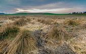 picture of barbed wire fence  - Early spring meadow with barbed wire fence at sunset - JPG