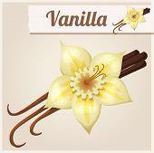 pic of vanilla  - Vanilla - JPG