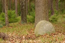 image of errat  - The photo shows an erratic boulder, which is located in the forest. It is located directly adjacent to the tree. In the background you can see a small, young spruce trees and trunks of tall pines and birches. ** Note: Soft Focus at 100%, best at smaller  - JPG