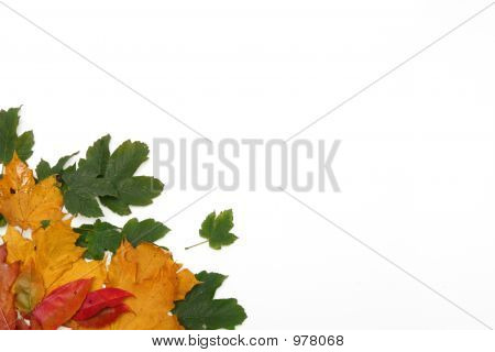 Colorful Leaves Frame