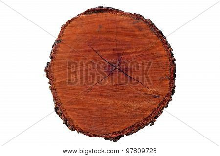 Tree annual ring circle wood (Die cutting)