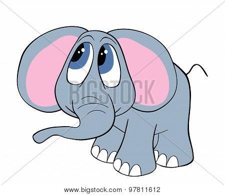 Cute Baby Elephant Isolated On White