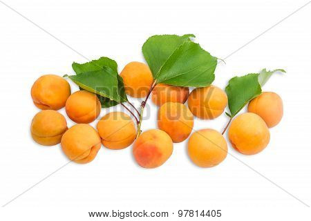Several Ripe Apricot And A Branch With Leaves Closeup
