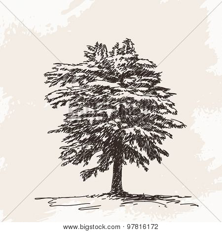 Sketch of pine tree Hand drawn illustration