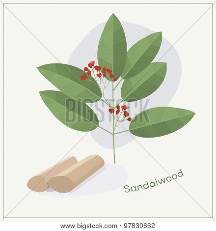 Sandalwood tree branch