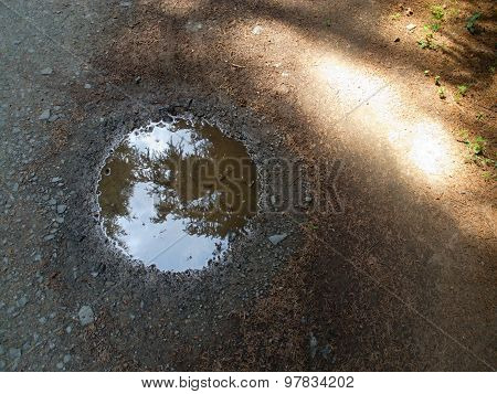 Puddle In The Woods