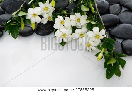 gardenia with green plant on black pebbles