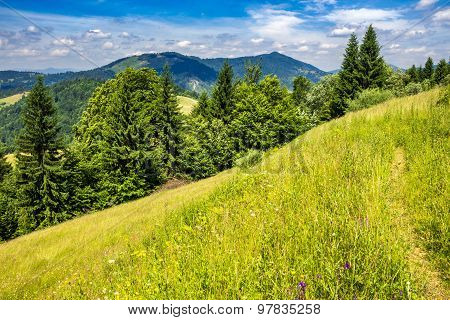 Evergreen Tree On A Mountain Slope