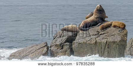 Sealion Make With Harem