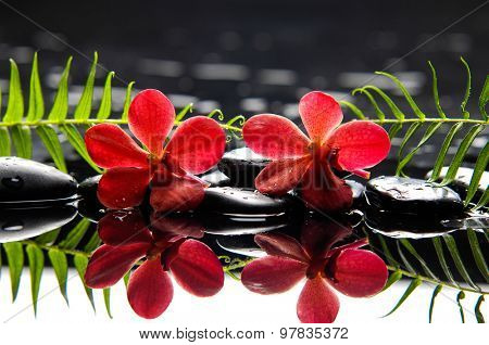 Red two orchid with green leaf with therapy stones