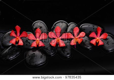 still life with black stone and five red orchid