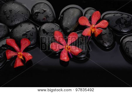 beautiful red three orchid with therapy stones