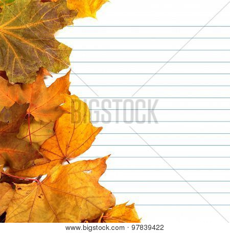 Autumn Maple-leafs And Notebook Paper